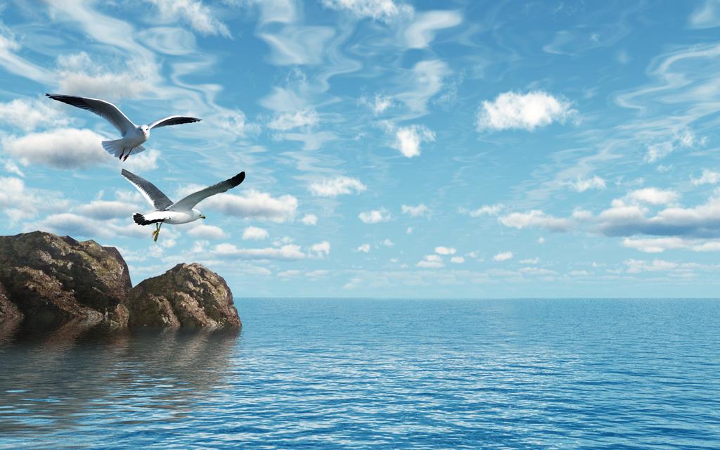海鸥大海蓝天白云背景墙图片