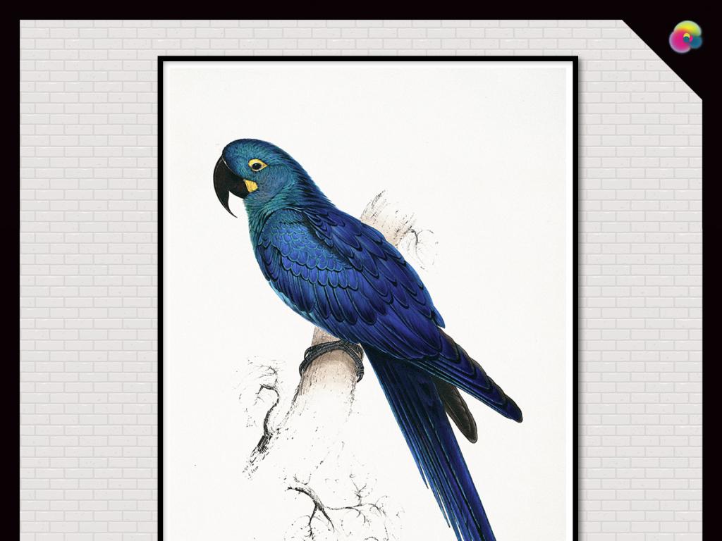无框画 动物图案无框画 > 时尚简约美式复古水彩鹦鹉装饰画  版权图片