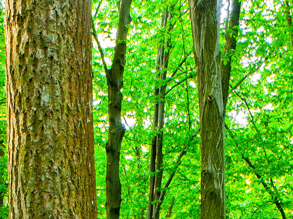 高清唯美绿色森林自然风景工装背景墙