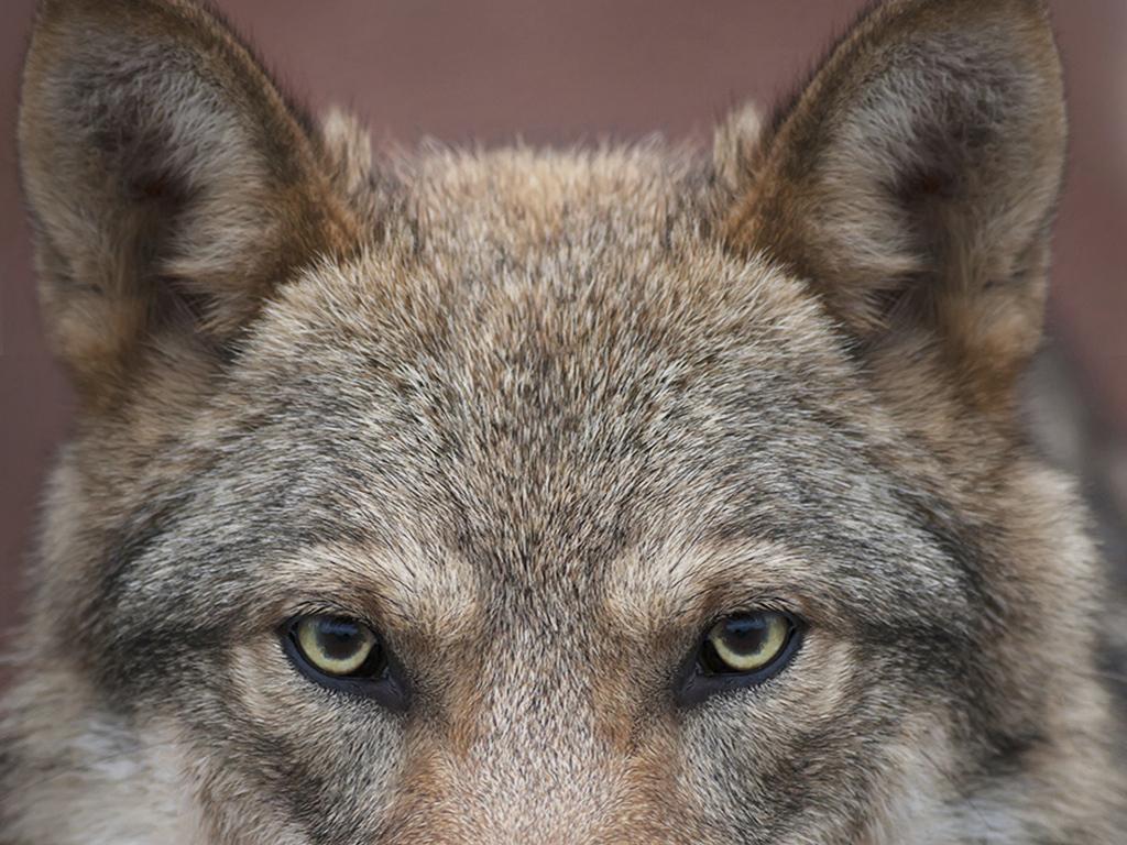 现代简约时尚狼动物头像摄影玄关过道
