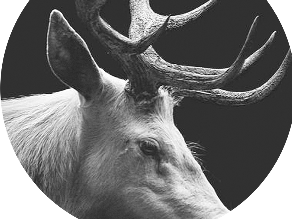 现代简约野生动物黑白投影无框画