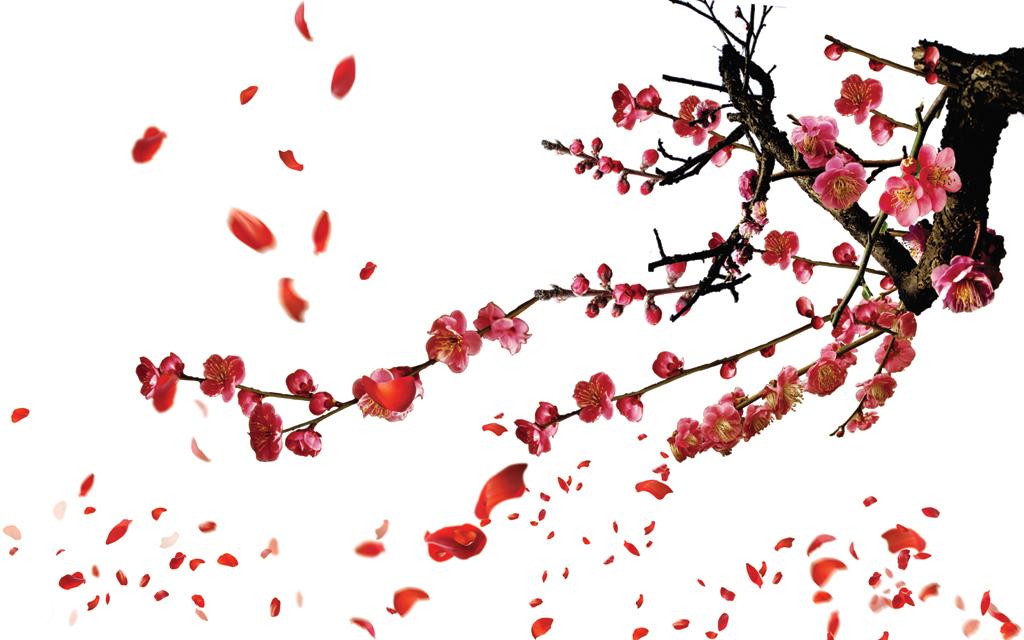 梅花红梅桃花花瓣飞舞红花背景墙