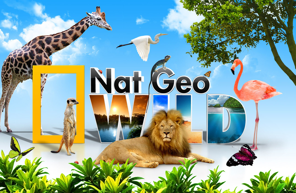 环保海报公益广告绿色生态公益海报环保地球家园动物