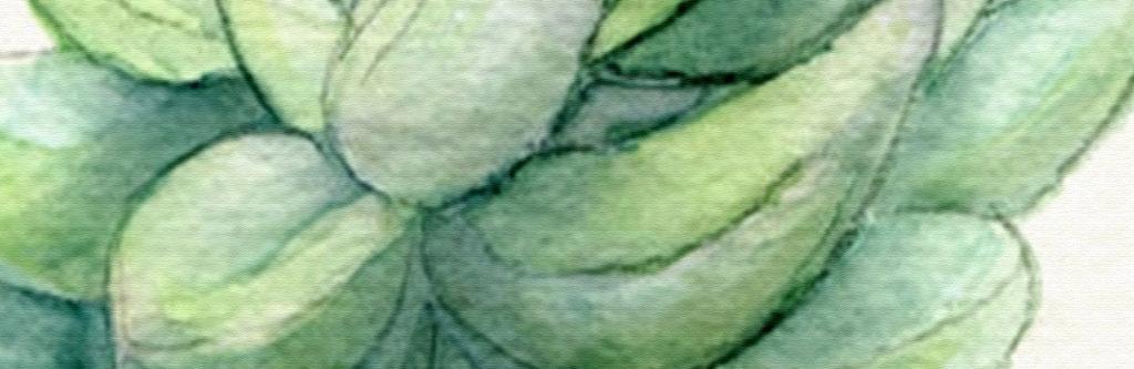 多肉植物简约植物绿色无框画室内装饰画人物装饰画抽象装饰画风景装饰