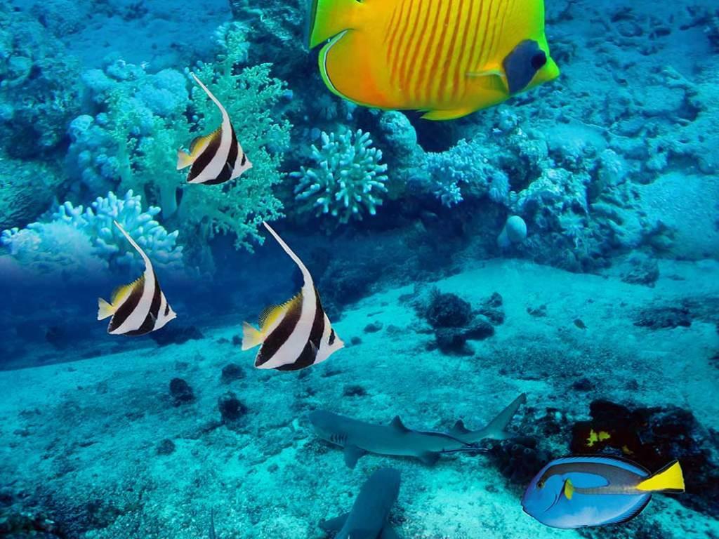 海底世界珊瑚3d地板地画图片
