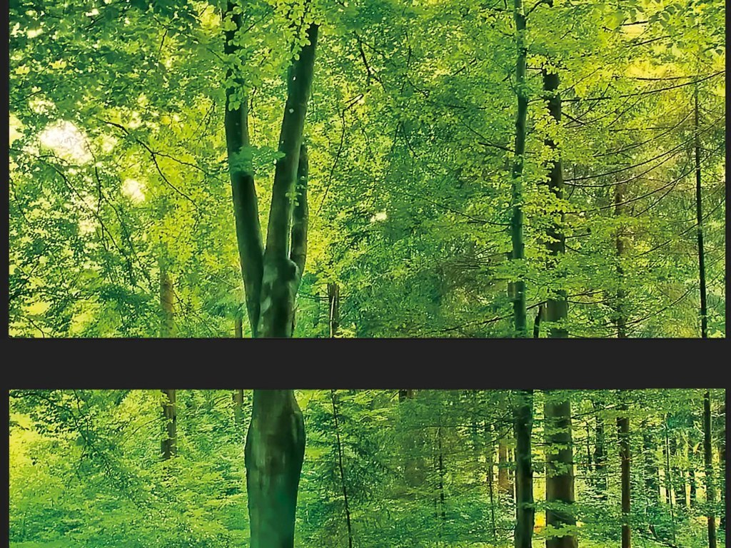 背景墙|装饰画 全屋背景墙 主题空间 > 巨幅全景森林全场景全屋绿色