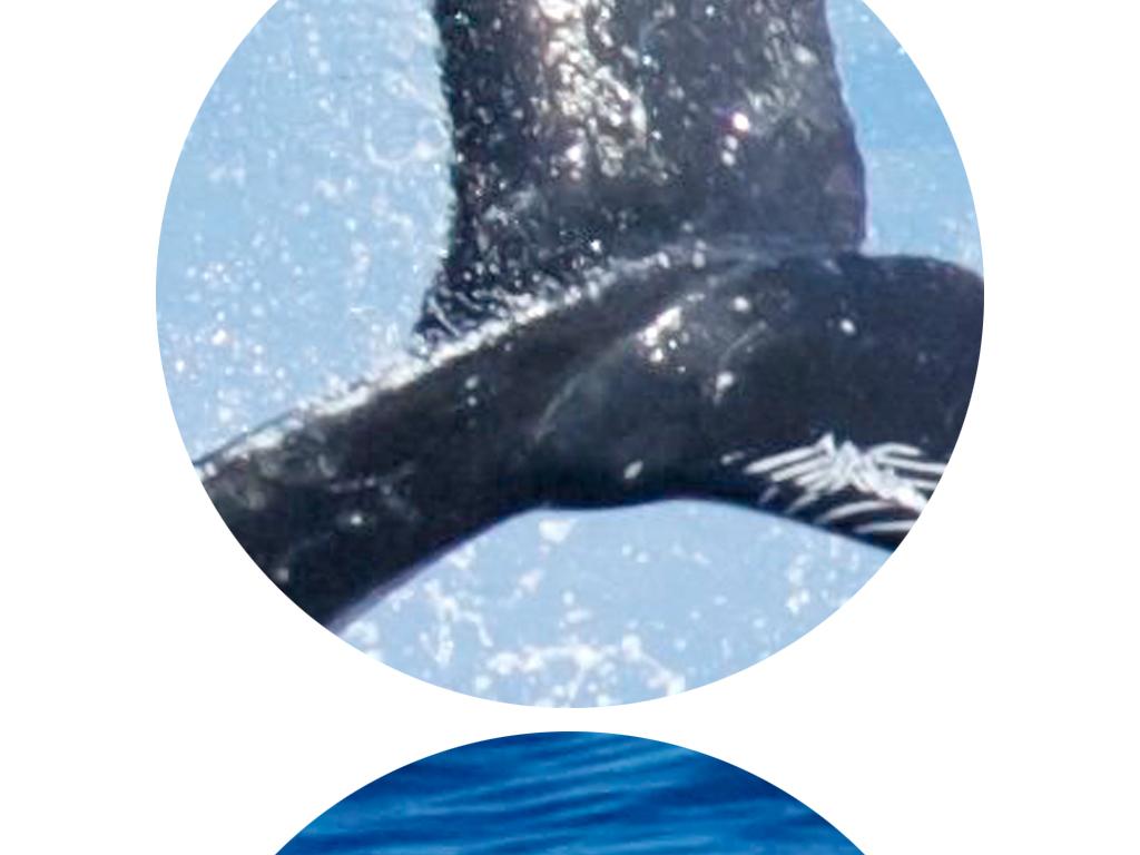 3d立体海洋世界鲸鱼电视背景墙