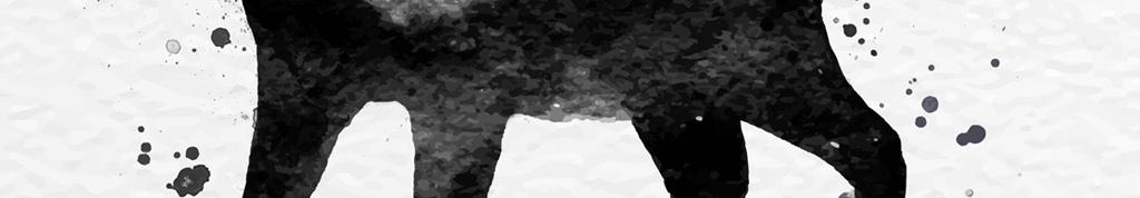 黑白简约宠物猫装饰画下载(图片编号:15834952)_动物