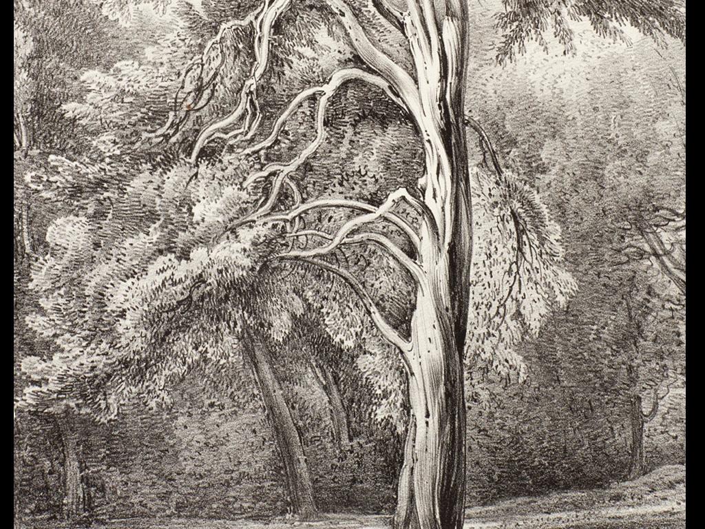 手绘素描家庭树玄关(图片编号:15839397)