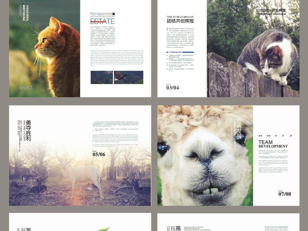 动物系列宣传册
