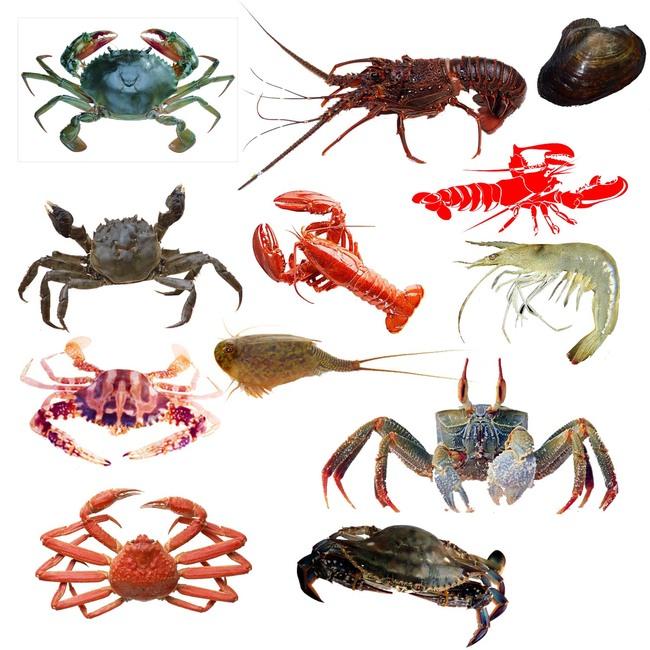 节肢动物 虾 鱼虾_节肢动物 虾 鱼虾