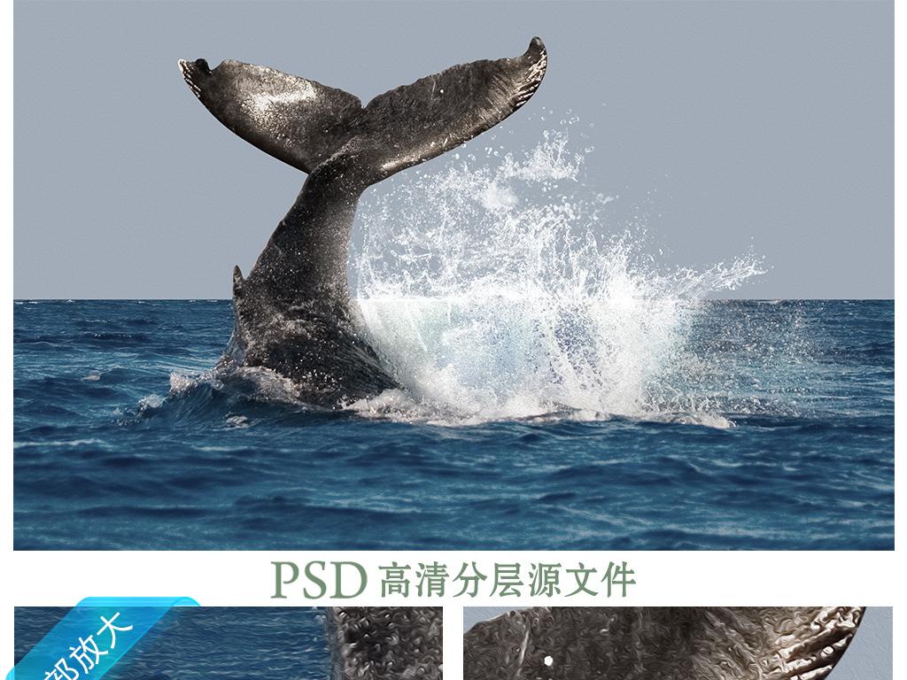 壁纸 动物 海洋动物 桌面 1024_768