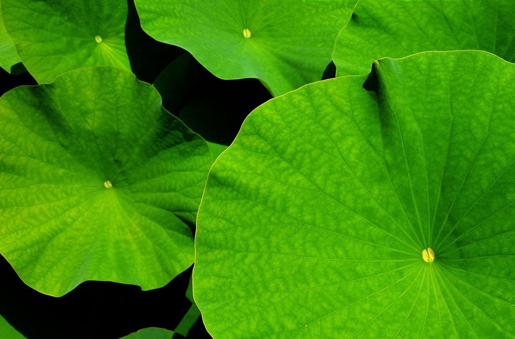背景 壁纸 绿色 绿叶 树叶 植物 桌面 1024_675