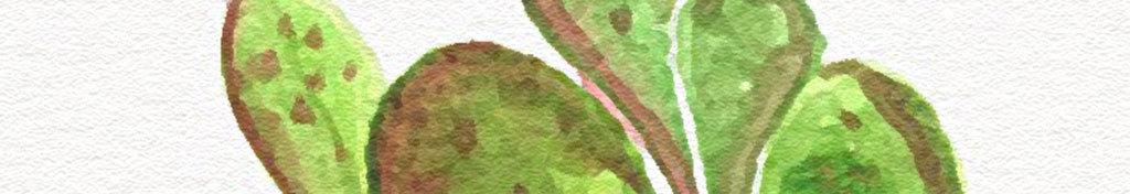 北欧风手绘小清新仙人掌图案无框画(图片编号:)_植物