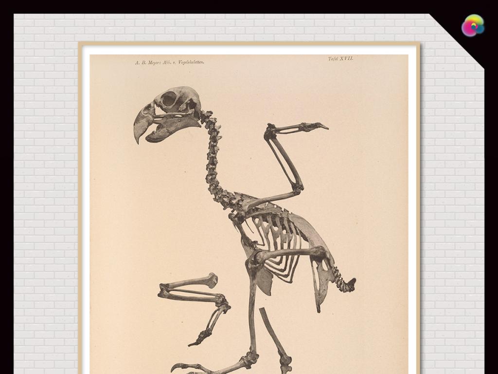 北欧现代简约手绘手绘动物骨架插画装饰画