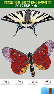 彩色美丽蝴蝶SU模型