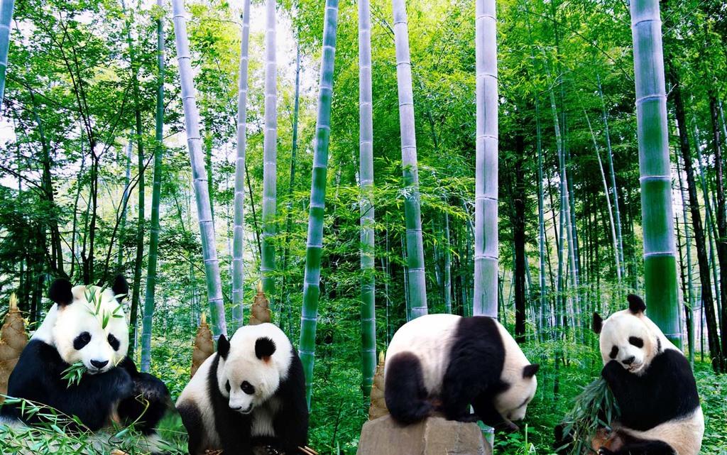 大熊猫竹林竹子背景墙