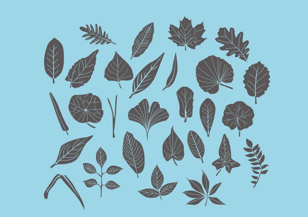 黑白手绘                                  树叶