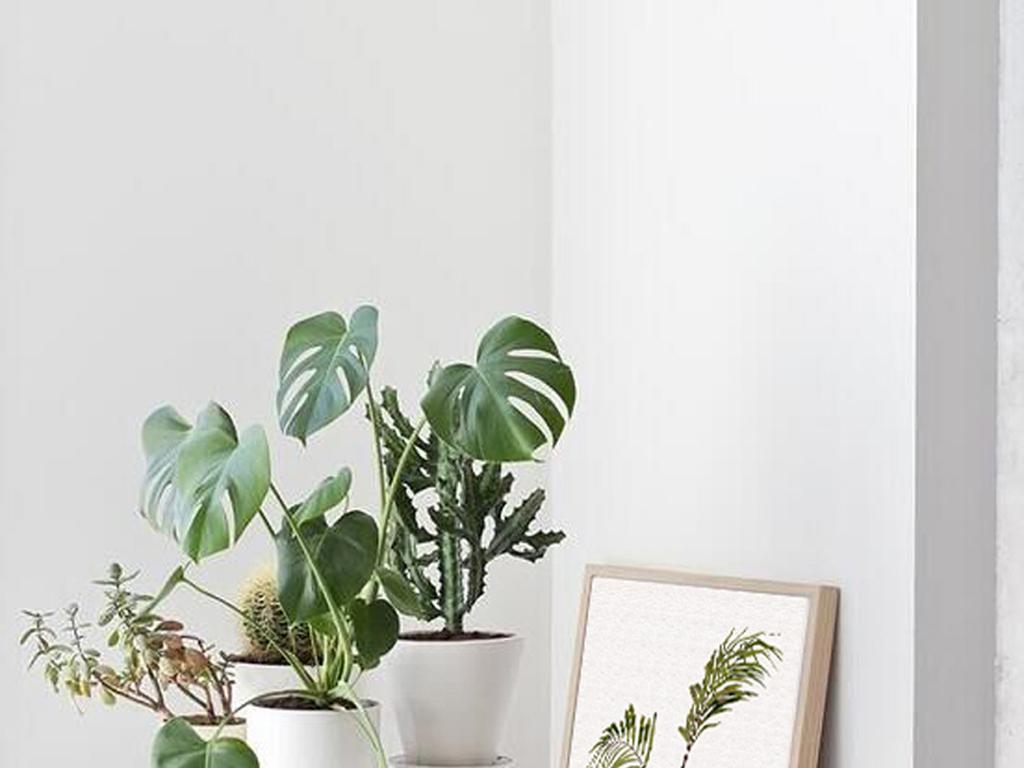 北欧简约风格盆栽植物无框画