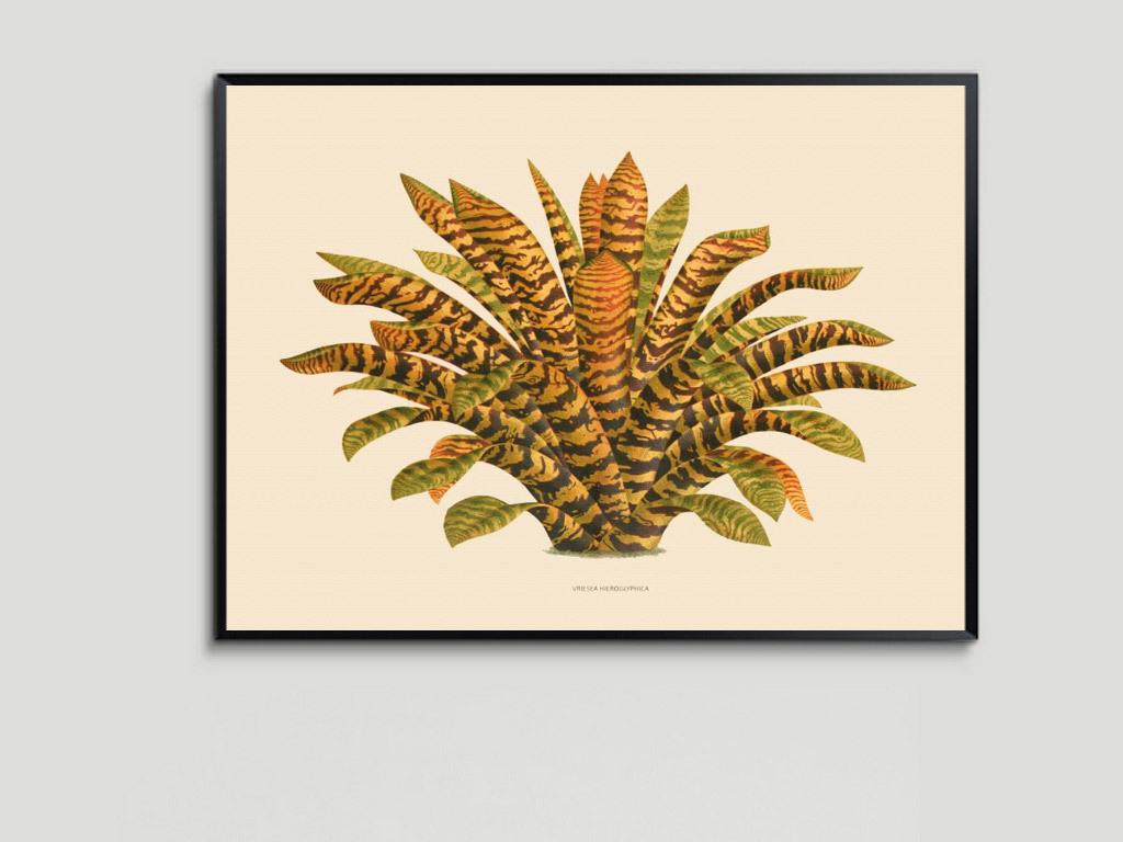 手绘热带植物无框画