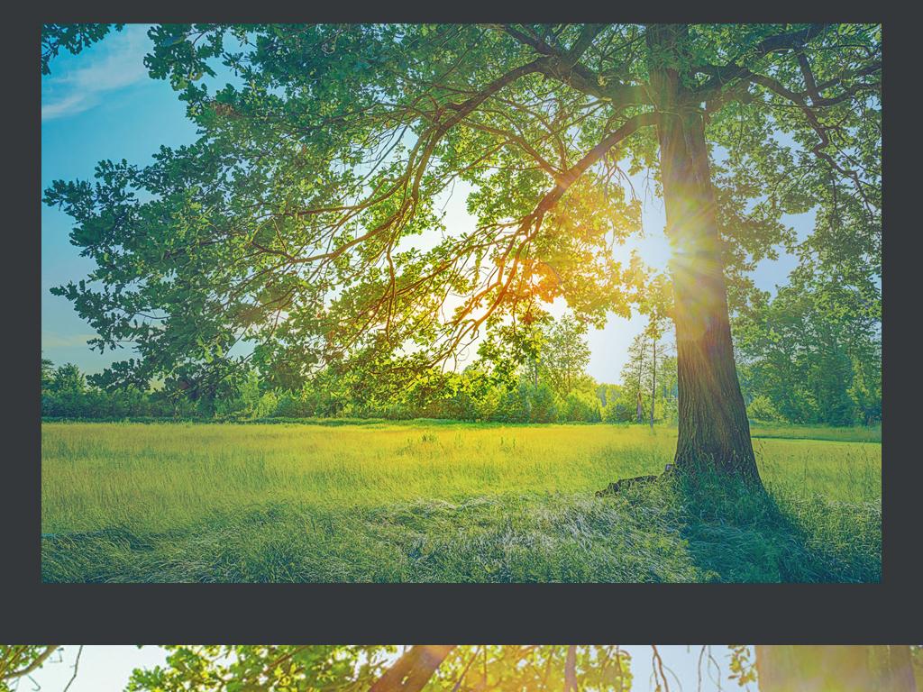 阳光大树风景图片