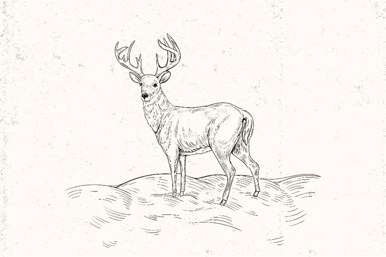 黑白手绘线描麋鹿矢量图