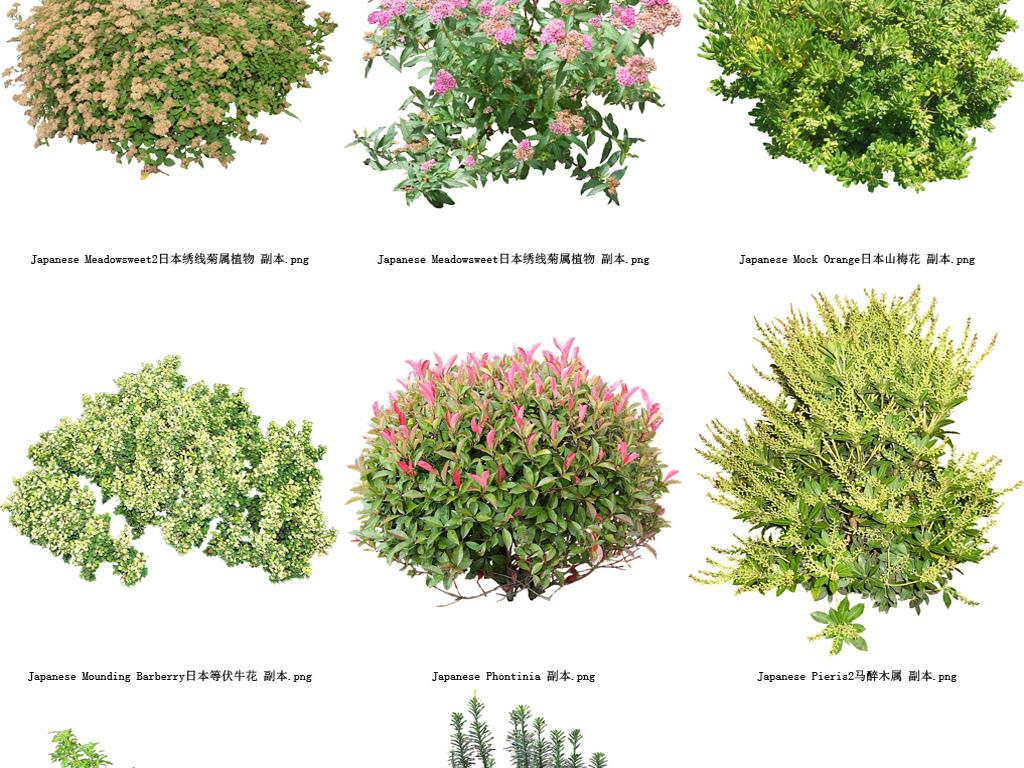 梅花植物透明背景系列高清图42