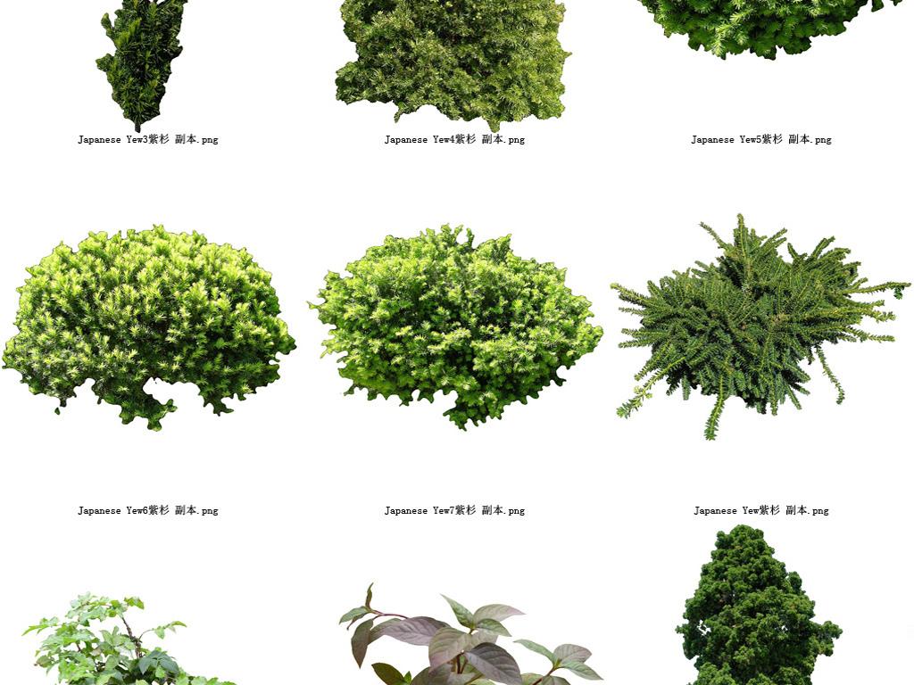 花草树木透明背景系列高清图44