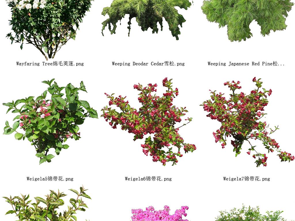 ps免抠透明背景素材 鲜花