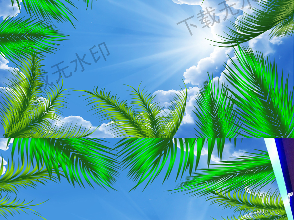 没有叶子的椰树