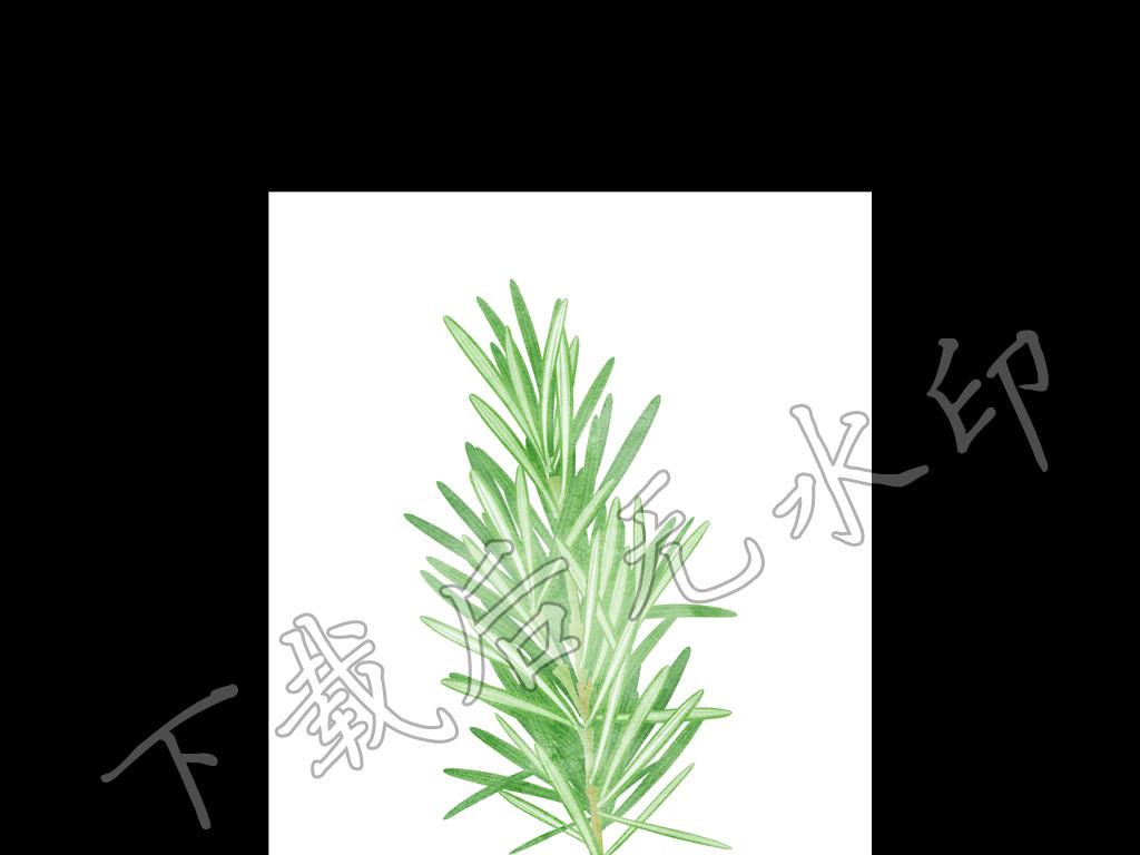 手绘彩铅松树叶子