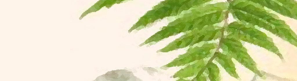 热带雨林热带植物绿叶芭蕉叶树叶棕树热带现代手绘现代简约风格简约风