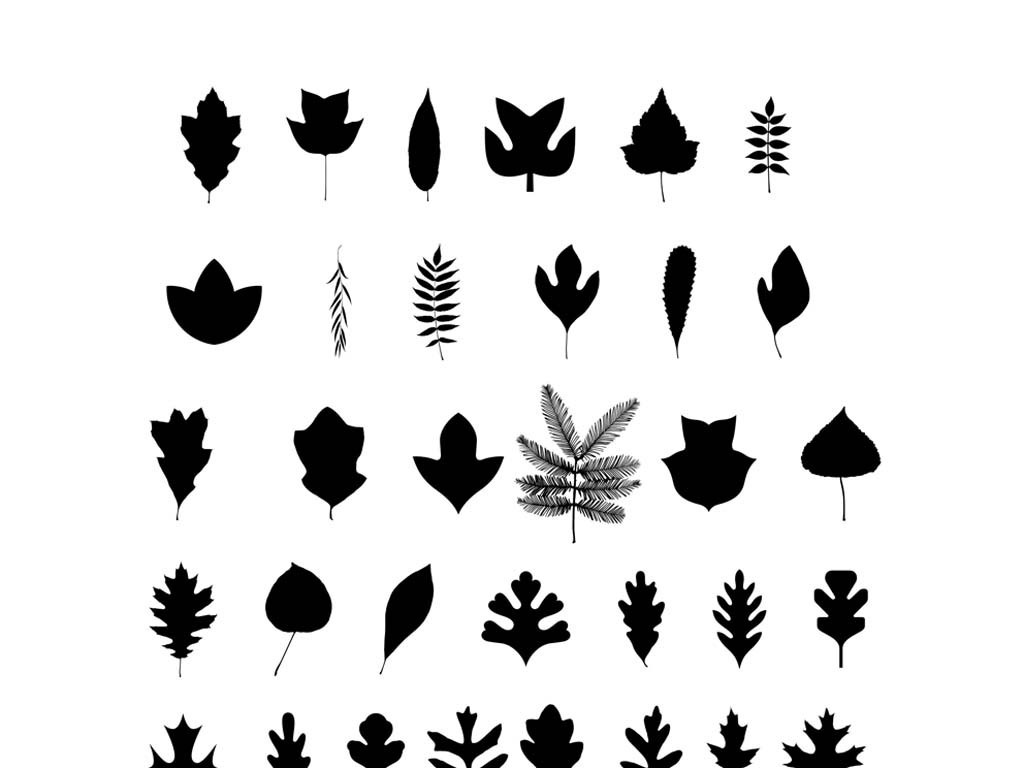 平面|广告设计 其他 设计素材 > 植物树叶矢量素材叶子叶片  版权图片图片