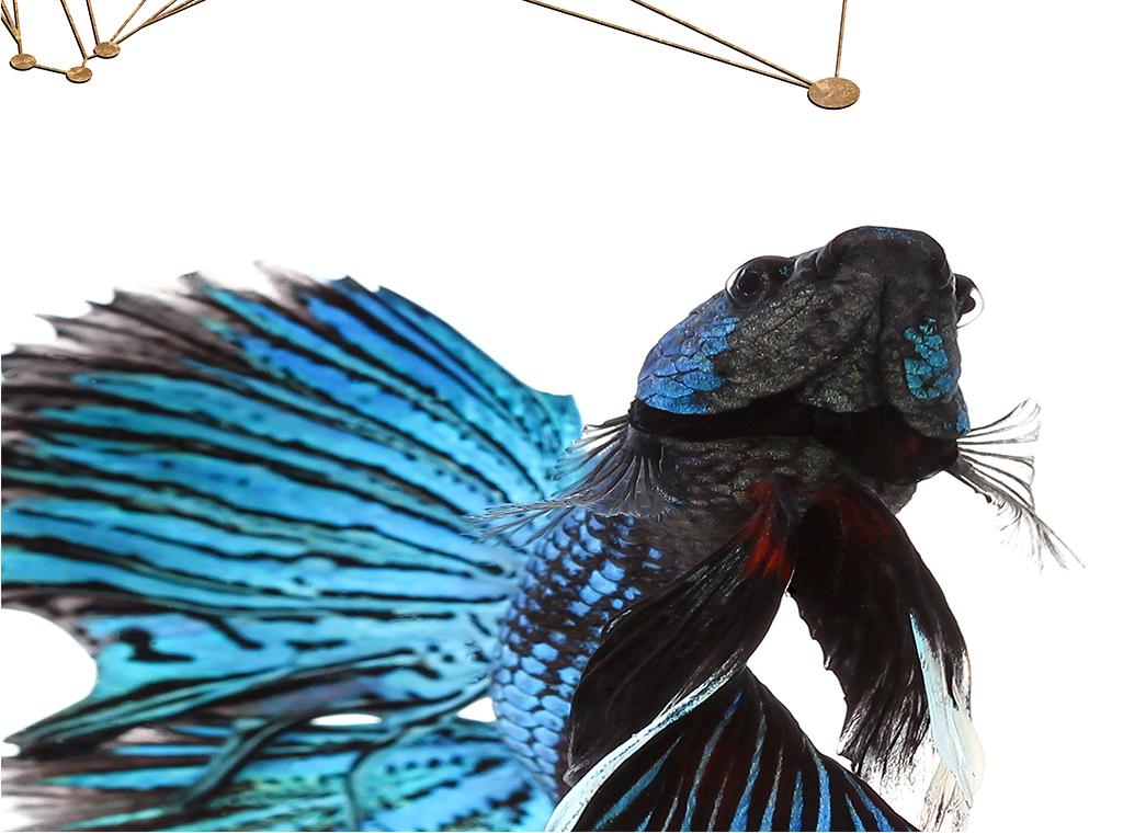 背景墙|装饰画 无框画 动物图案无框画 > 现代简约北欧抽象摄影鱼装饰
