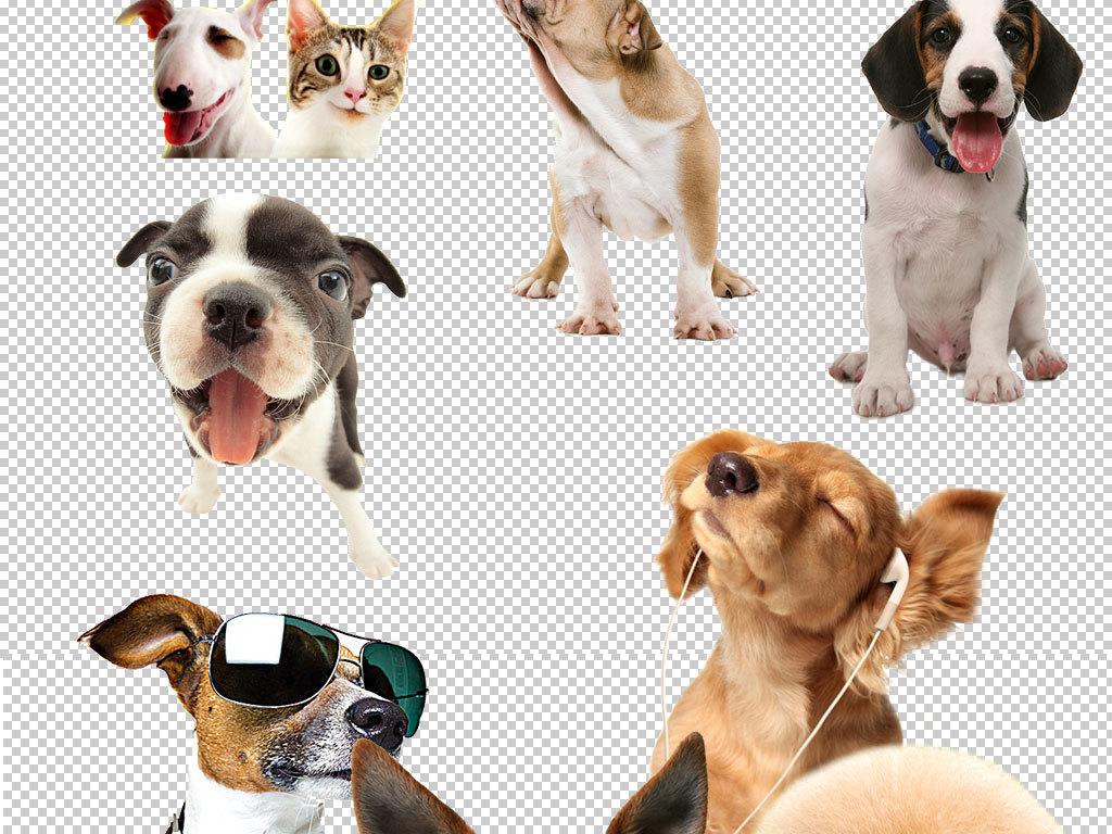 多款卡通小狗头像png素材(图片编号:15922497)_动物