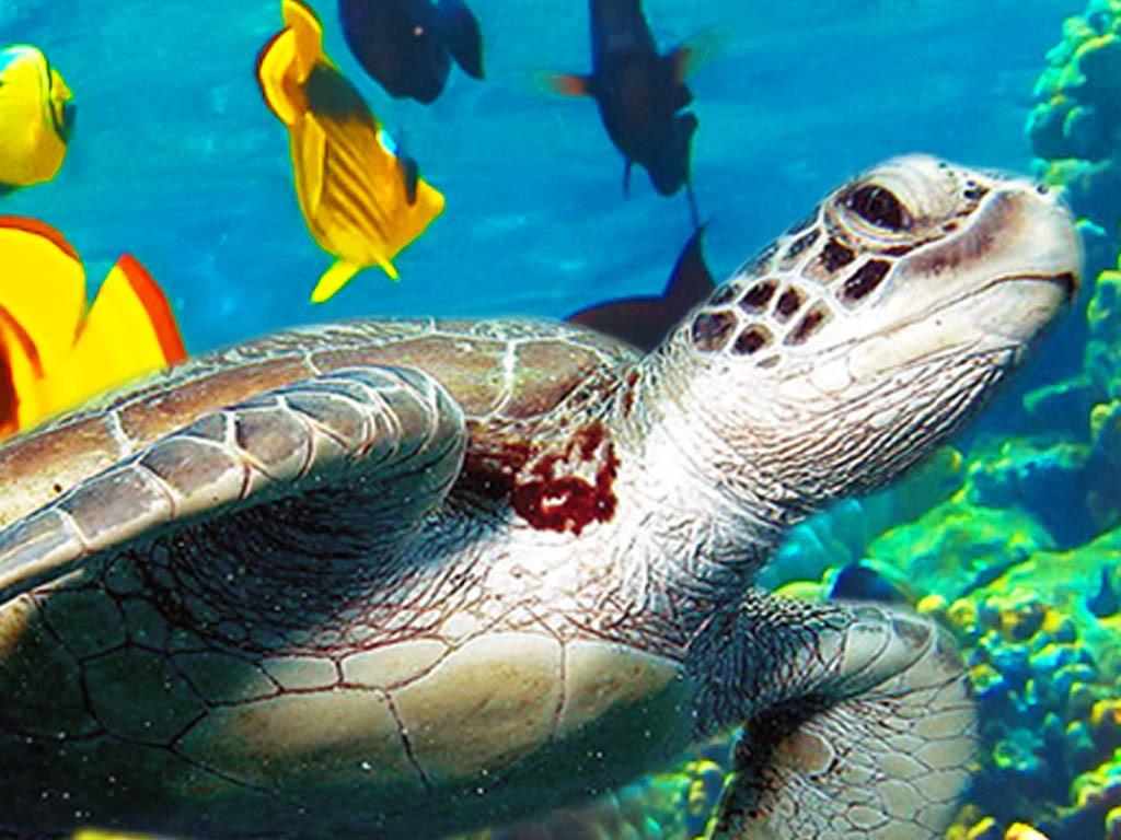 海底世界海豚3d地板立体画