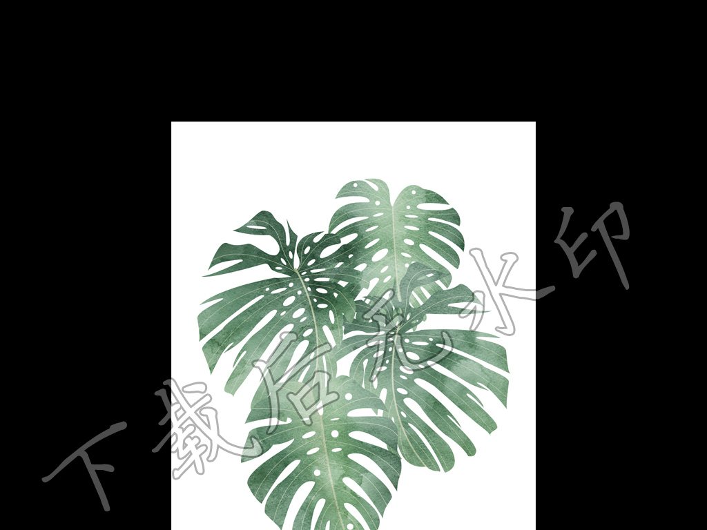 黑白龟背竹手绘