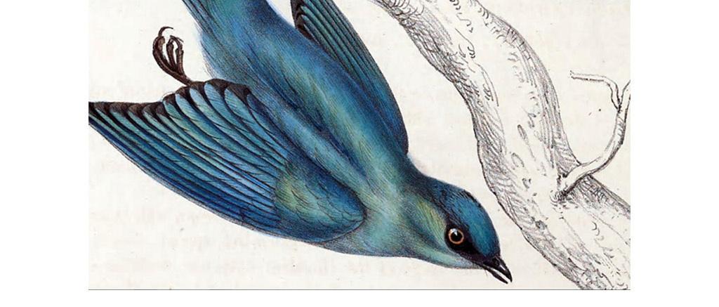 工笔画手绘花鸟无框画装饰画