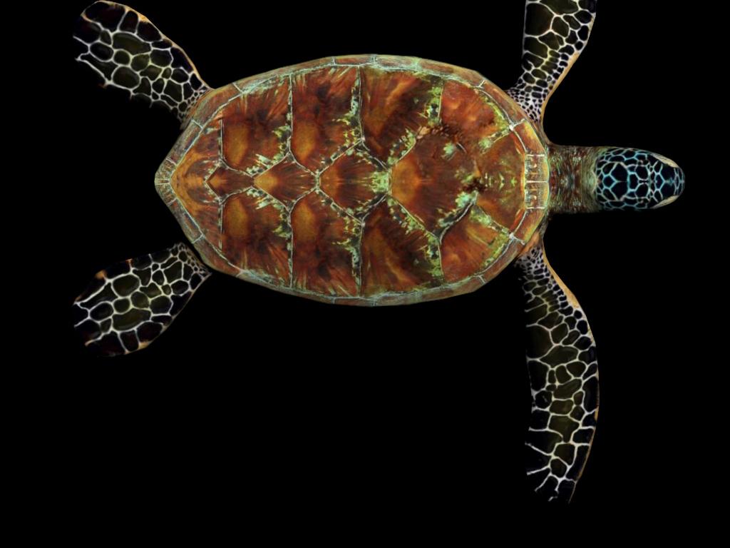 海龟3d游戏模型带动作