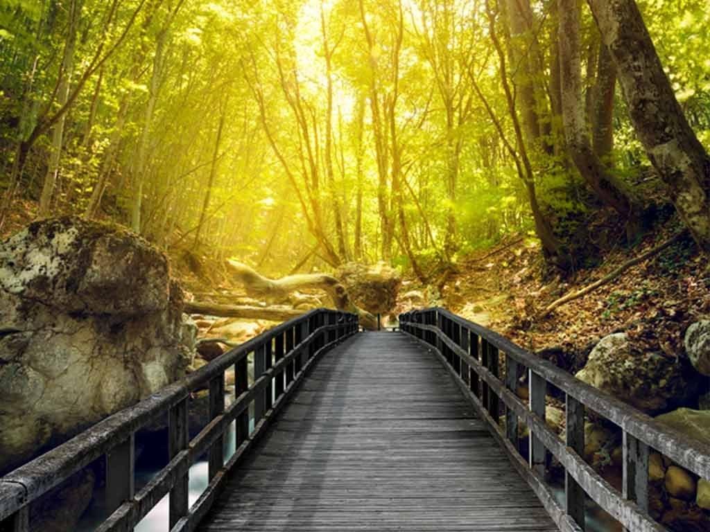 木桥阳光森林3d玄关