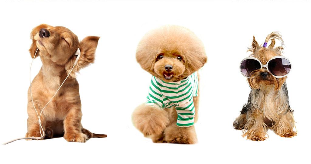 动物照片墙照片墙照片可爱简约欧式可爱狗狗建筑效果图门头效果图3d