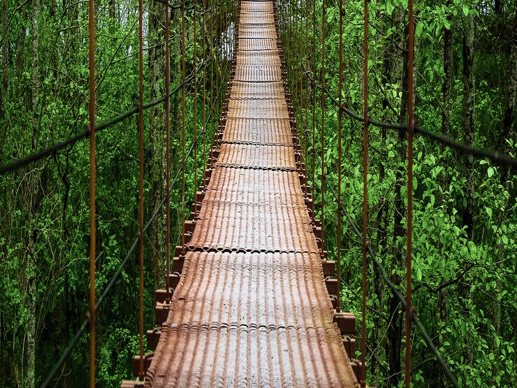 玄关风景画吊桥绿色森林摄影风景背景墙