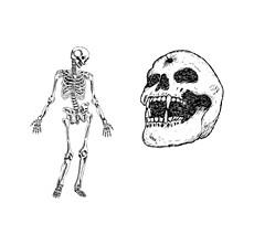 骷髅矢量素材恐怖死人头头骨骨架