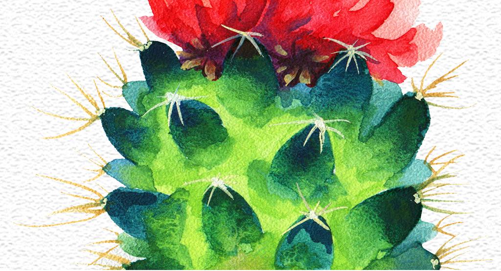 现代简约绿植小清新仙人掌床头画图片