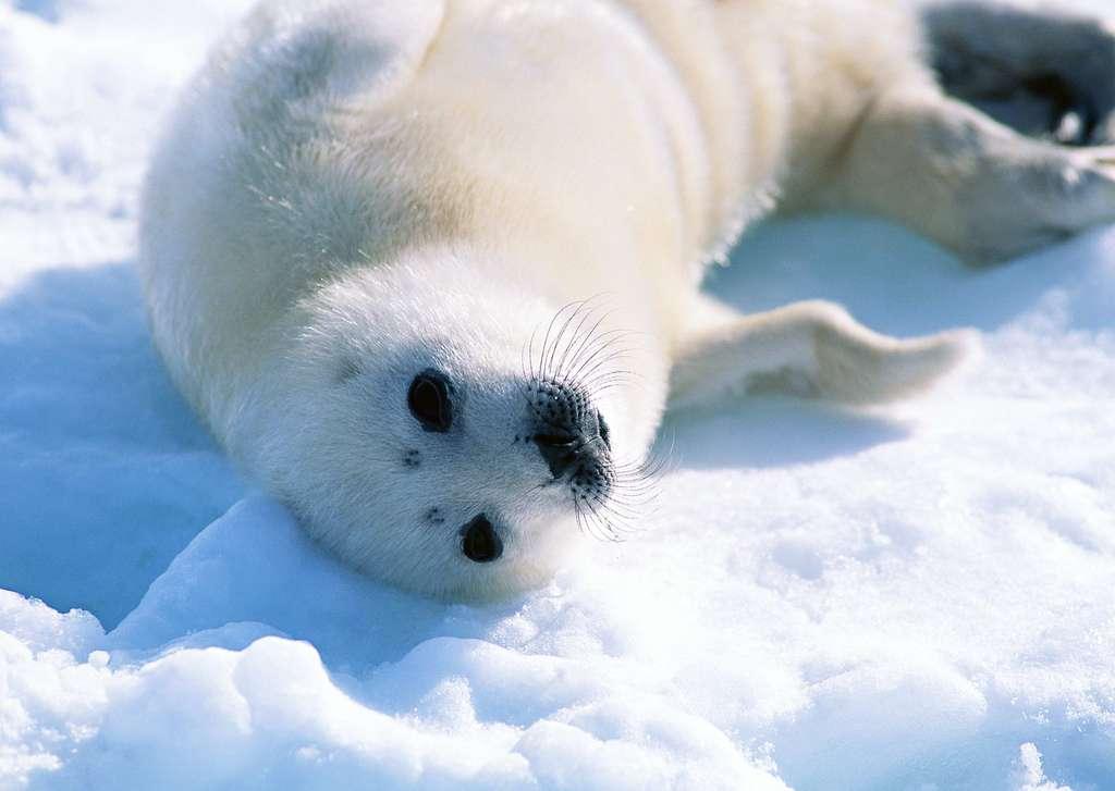 """【本作品下载内容为:""""极地海洋生物动物世界海狮海豹摄影""""模板,其他内容仅为参考,如需印刷成实物请先认真校稿,避免造成不必要的经济损失。】 【声明】未经权利人许可,任何人不得随意使用本网站的原创作品(含预览图),否则将按照我国著作权法的相关规定被要求承担最高达50万元人民币的赔偿责任。"""