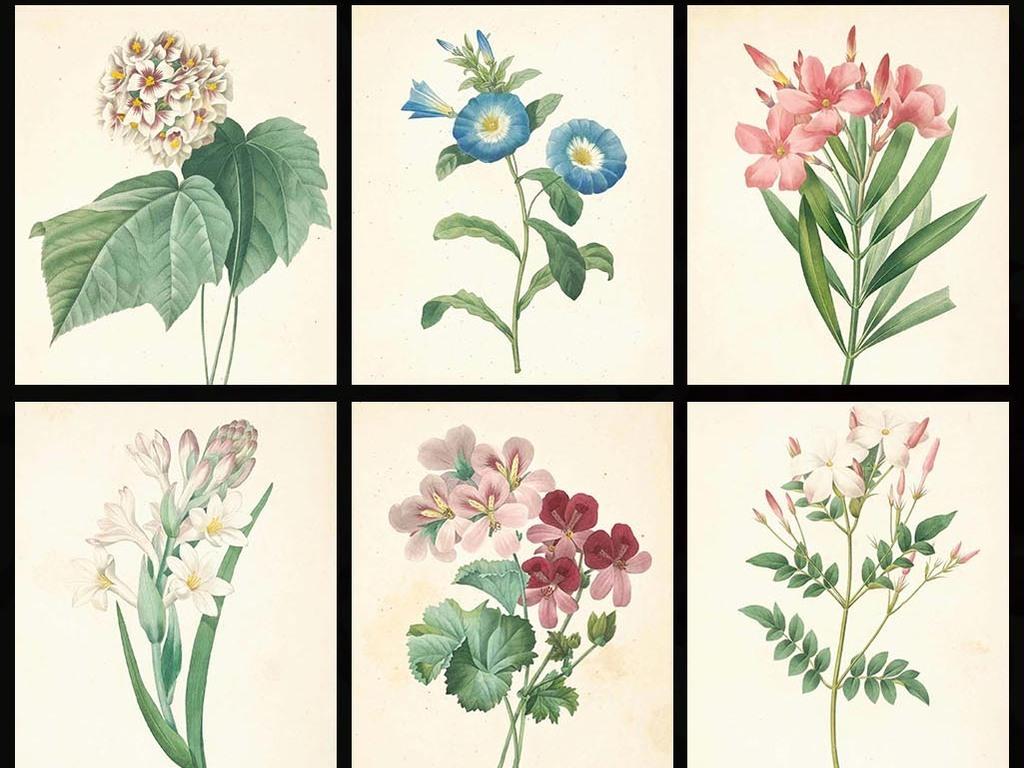 高清唯美复古手绘彩绘花蕊设计素材