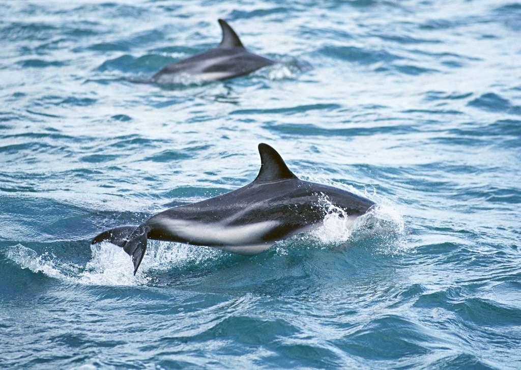 大海动物海洋生物世界海豚海浪素材图片下载素材-其他