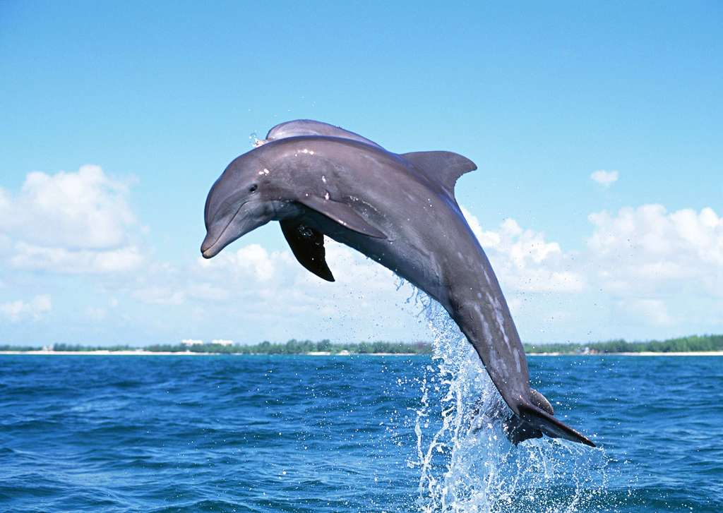 位图, cmyk格式高清大图,使用软件为海底世界动物世界海洋生物海鱼