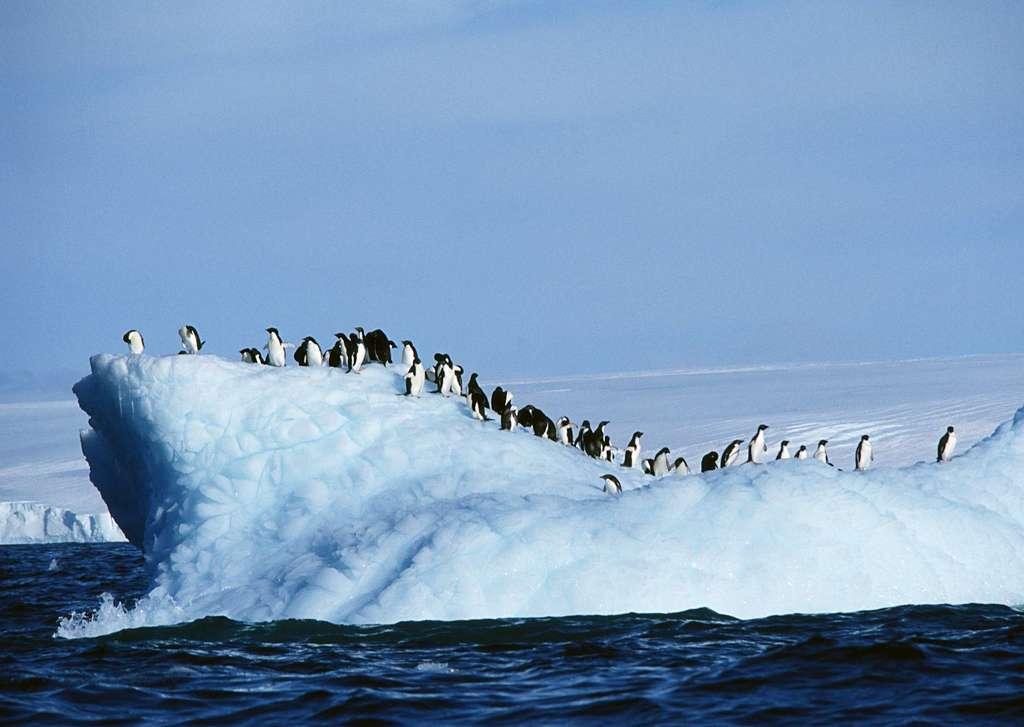 北极地理动物动物世界南极生物海生动物雪地南极风