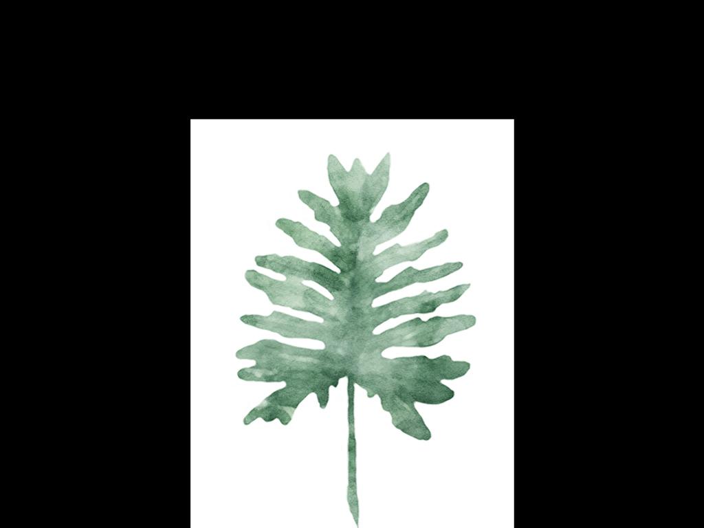 龟背竹蕨类植物芭蕉标本小清新风格简约风格手绘清新清新水彩手绘水彩
